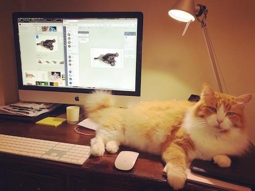 Mowgli Crazy Cat VA virtual assistant